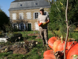 jardin citrouilles