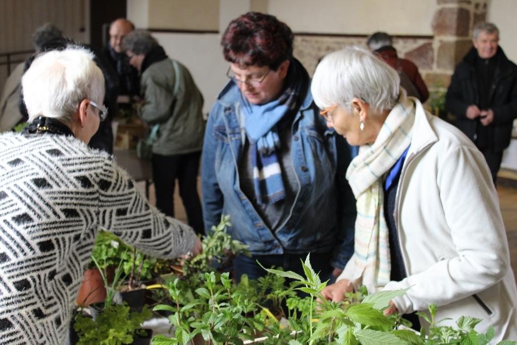 Echanges à propos des plantes à disposition